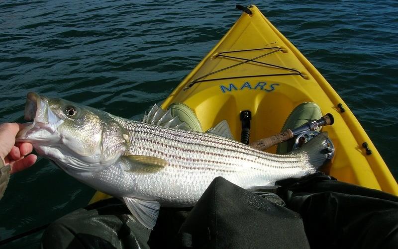 Best kayak for fishing